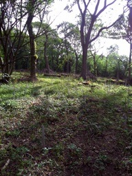 newly_coppiced